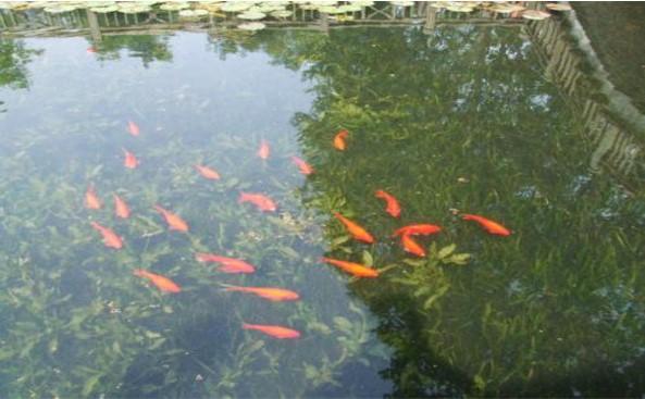 水生动物调控2.jpg