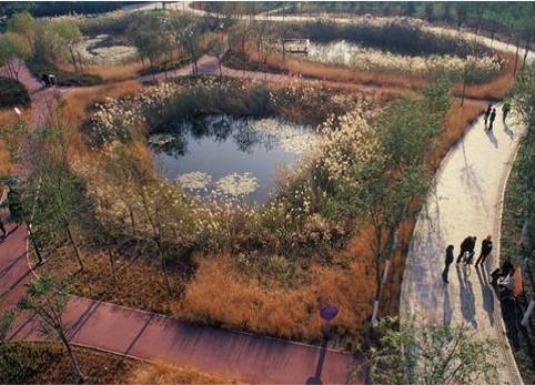 多功能生境湿地.jpg