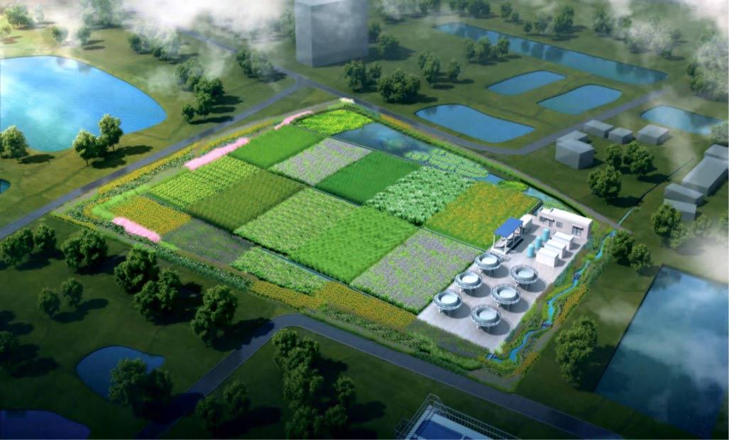 砾间矿化湿地1.jpg